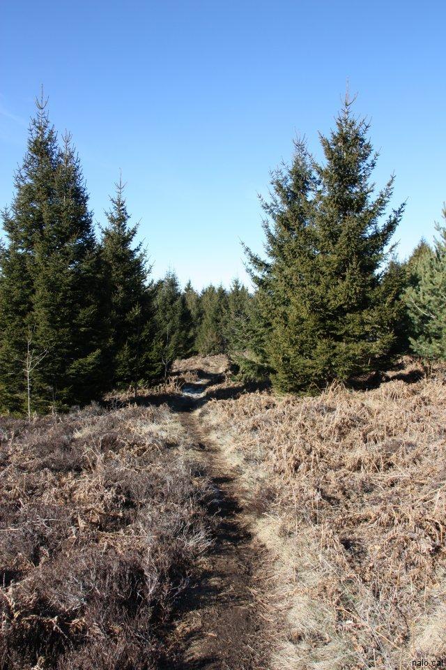 Caminet entre arbres