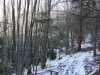 Neu sota els arbres