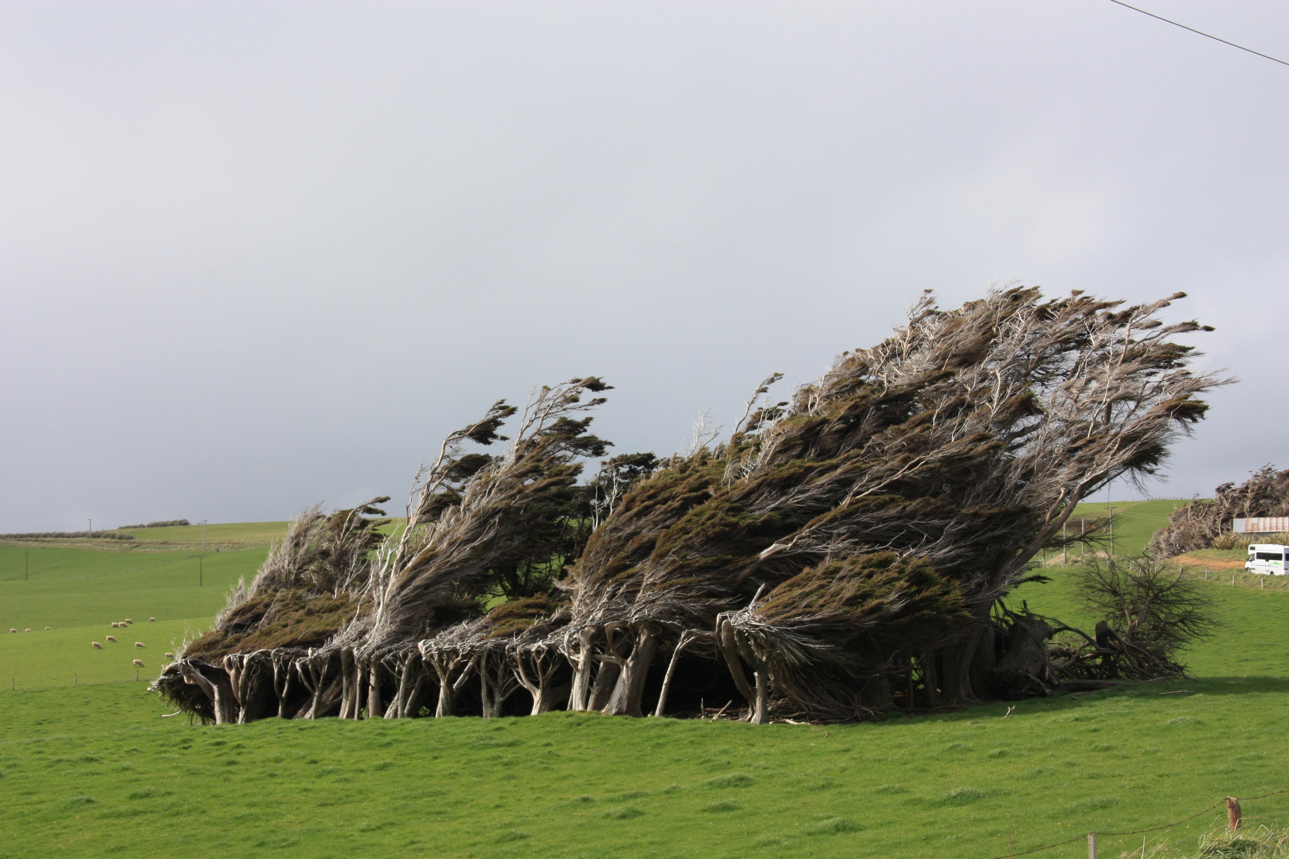 La força del vent