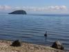 Cisnes al llac Taupo