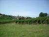 Vinyes Saint Emilion
